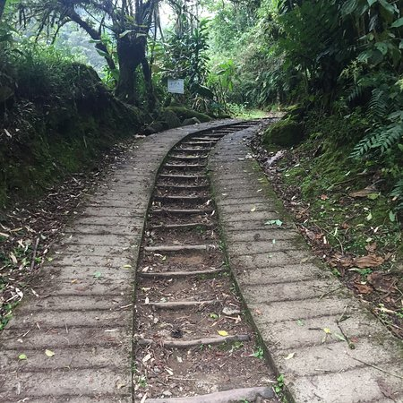 Chirripo National Park, Costa Rica: Nice hiking paths. Started raining & ground became slippery but the steps helped.