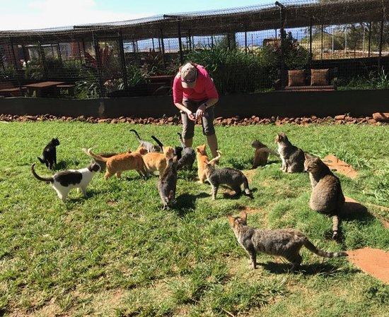 20180204_125218_large jpg - Picture of Lanai Cat Sanctuary, Lanai