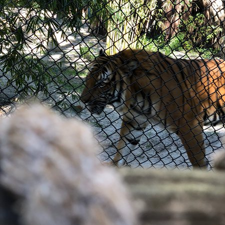 Palm Beach Zoo & Conservation Society: photo0.jpg