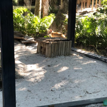 Palm Beach Zoo & Conservation Society: photo1.jpg