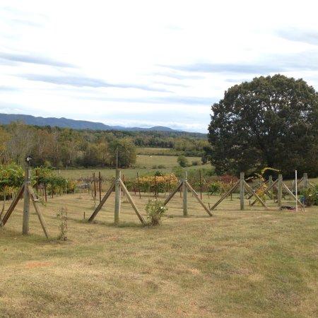Blue Goose Farm and Vineyards: photo4.jpg