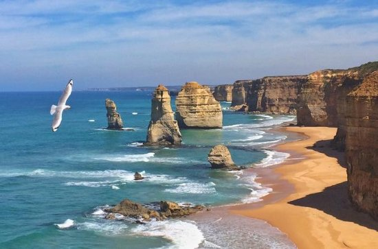 Tour privato Great Ocean Road e 12