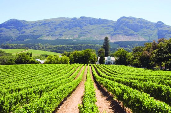 Half day Winelands Tour (afternoons...