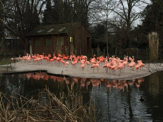 Prague Zoo Photo