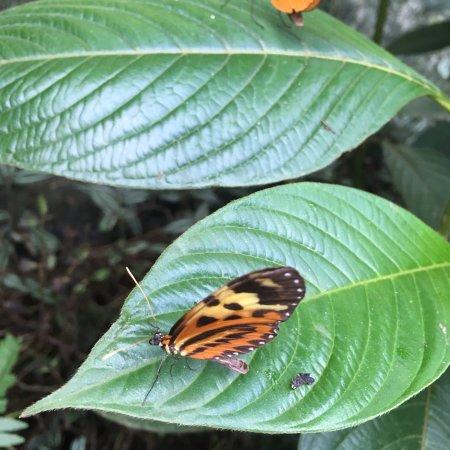 Mariposario Tambopata: photo0.jpg