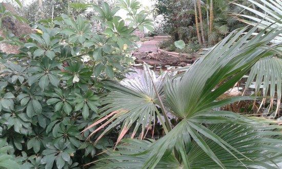 Olmedo, Italien: Esplorazione Casa delle farfalle