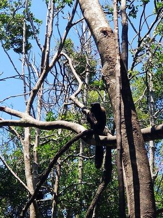 Monkeyland Primate Sanctuary: 20180123_132923_large.jpg