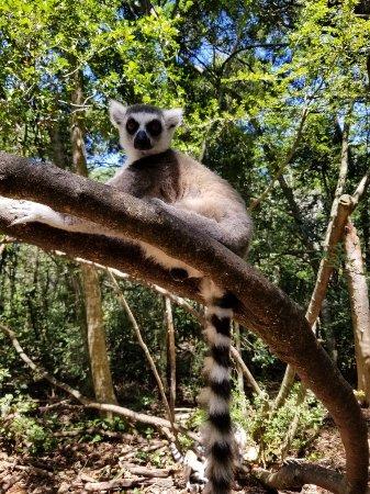 Monkeyland Primate Sanctuary: 20180123_132522_large.jpg