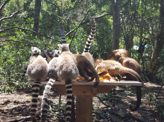 Monkeyland Primate Sanctuary Photo