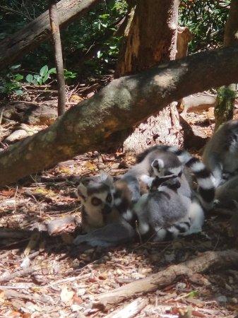 Monkeyland Primate Sanctuary: 20180123_132021_large.jpg