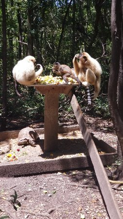 Monkeyland Primate Sanctuary: 20180123_131537_large.jpg