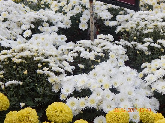 Sri Mayapur Chandrodaya Mandir, ISKCON: Garden in front of Isodayan Bhavan , Mayapur
