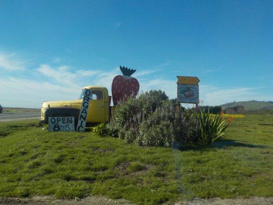 Davenport, Калифорния: Реклама на трассе. Мимо не проедите