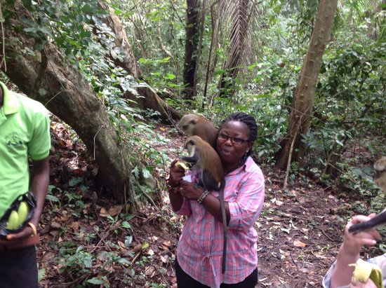 As a tour guide with a group to Tafi Atome, the monkeys were all over me with a banana at hand.