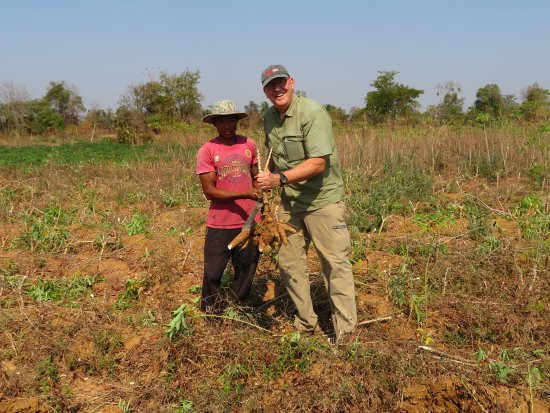 Banteay Meanchey Province, Cambodia: Cassava harvesting--it's hard work!