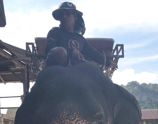Kinnaree Elephant Trekking Tours: grumpy fart