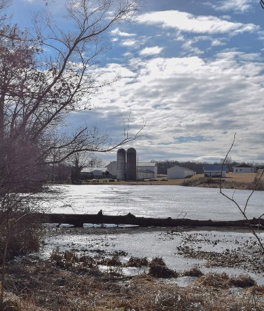 Raphine, VA: Frozen pond along Nature Walk
