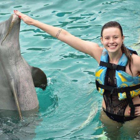 Dolphin Discovery Isla Mujeres: photo0.jpg