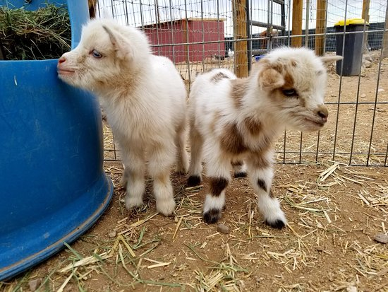 Funny Foot Farm and Tucson Petting Zoo