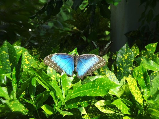 So Many Colorful Butterflies To See Picture Of Key West Butterfly