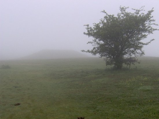 Kingley Vale: Top of the hill with the mounds visible through fog