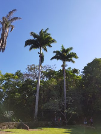 Museu Forte Defensor Perpetuo de  Paraty: Natureza maravilhosa