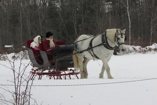 Greenfield Center, NY: Sarah the horse and Beth give a sleigh ride to a very happy couple.