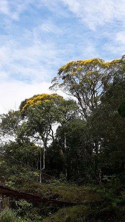 Parque Municipal Salto da Usina
