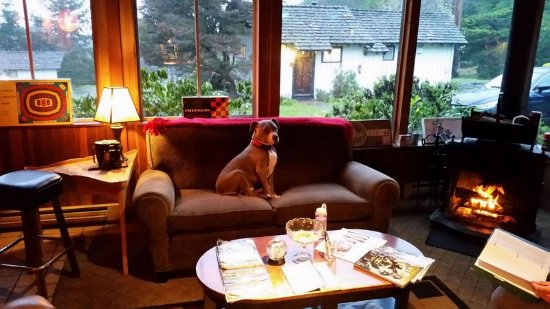 Little River, Californie : We love dogs! Even at happy hour in our lodge!