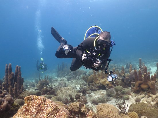 Read the complete diving guide: the caribbean (vol. 2) anguilla, st m….
