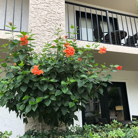 Wyndham Boca Raton: photo0.jpg