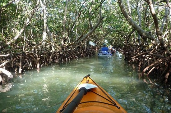 Eco-tour Mangrove Tunnel Kayak