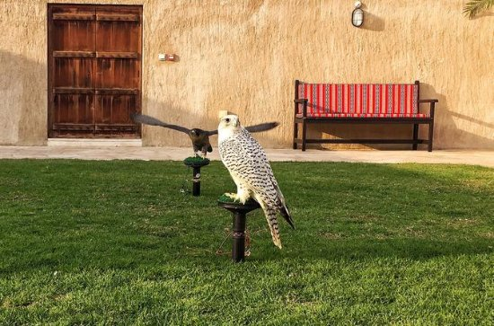 Dubai Falconry and Old Dubai Half-Day Walking Tour