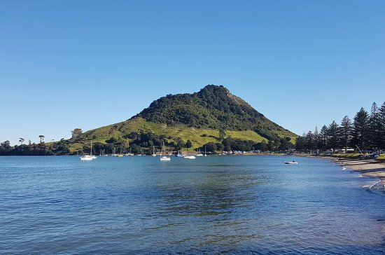 Half Day Small-Group Tauranga Scenic Tour from Port