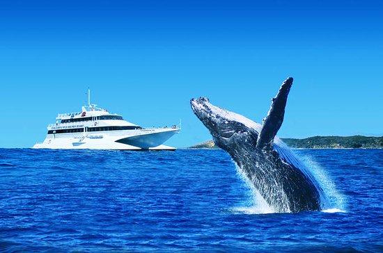 Tangalooma Island Resort Premium...