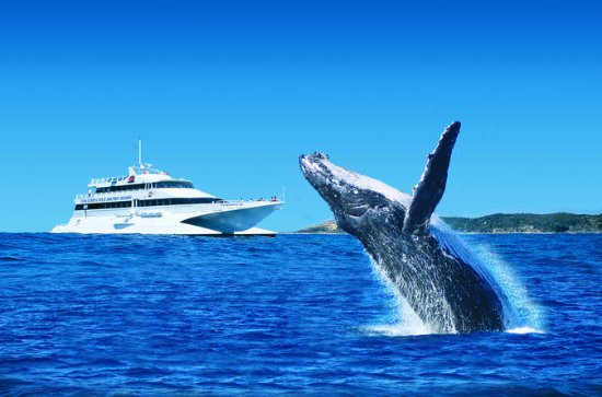 Tangalooma Island Resort Classic Whale...