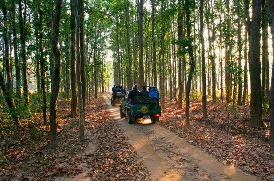 Bandhavgarh Tour med Kanha National...