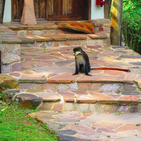 Bwindi Lodge: photo0.jpg