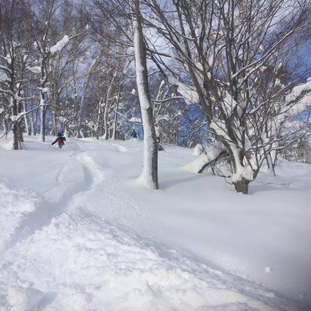 Rusutsu Resort Ski : 10 year old in 2 feet in trees, father sweep
