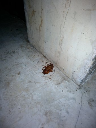 Milky Bay Resort: Another Cockroach