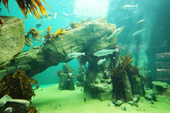 Macduff, UK: View into the central kelp reef exhibit