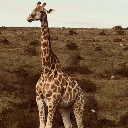 Driekoppen, Südafrika: photo5.jpg