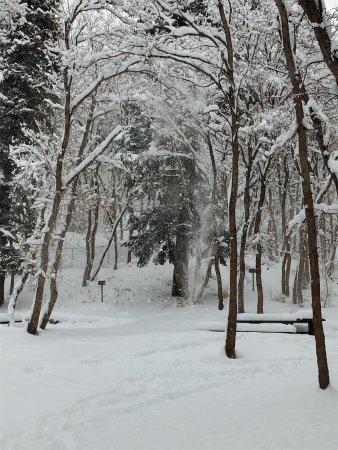 Mill Creek Canyon: Winter wonderland.