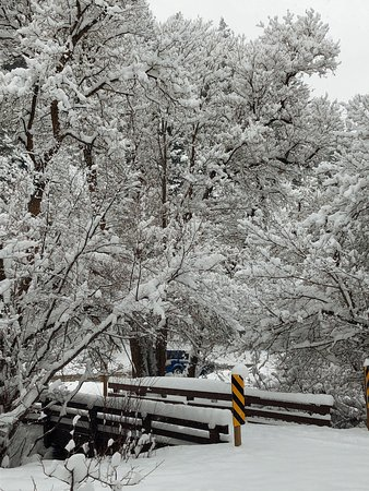 Mill Creek Canyon: White snow covered the trees.