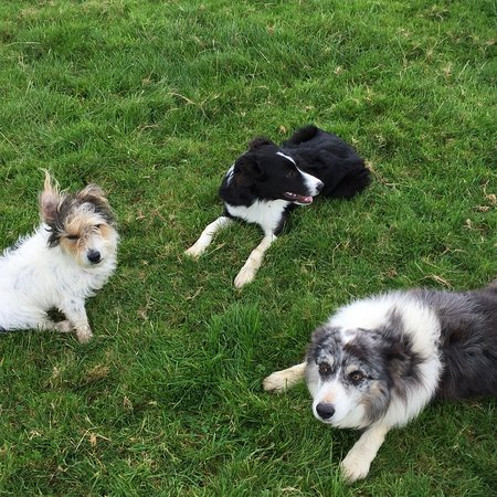 Brazzacott, UK: The friendly farm dogs