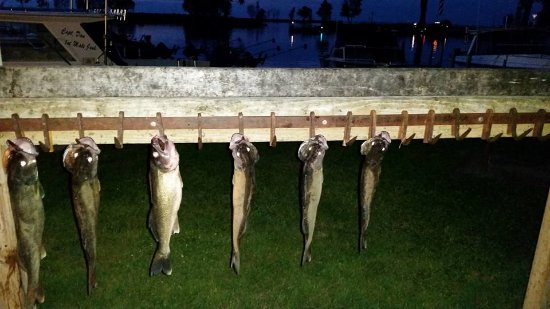 Sebewaing, MI: A quick evening trip for Walleye paid of in short order!