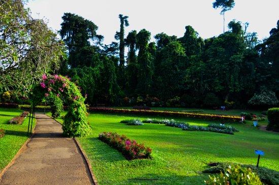 Peradeniya Botanical Gardens - Picture of Royal Botanical Gardens ...