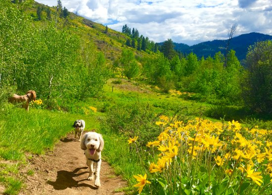 Twisp, WA: Off leash trails for hiking in spring!