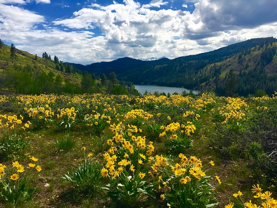 Twisp, WA: View of Lake Patterson with Balsam Root in bloom.