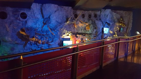 The Deep : Colourful displays